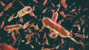 Cholera - Here Are The Symptoms And Treatment