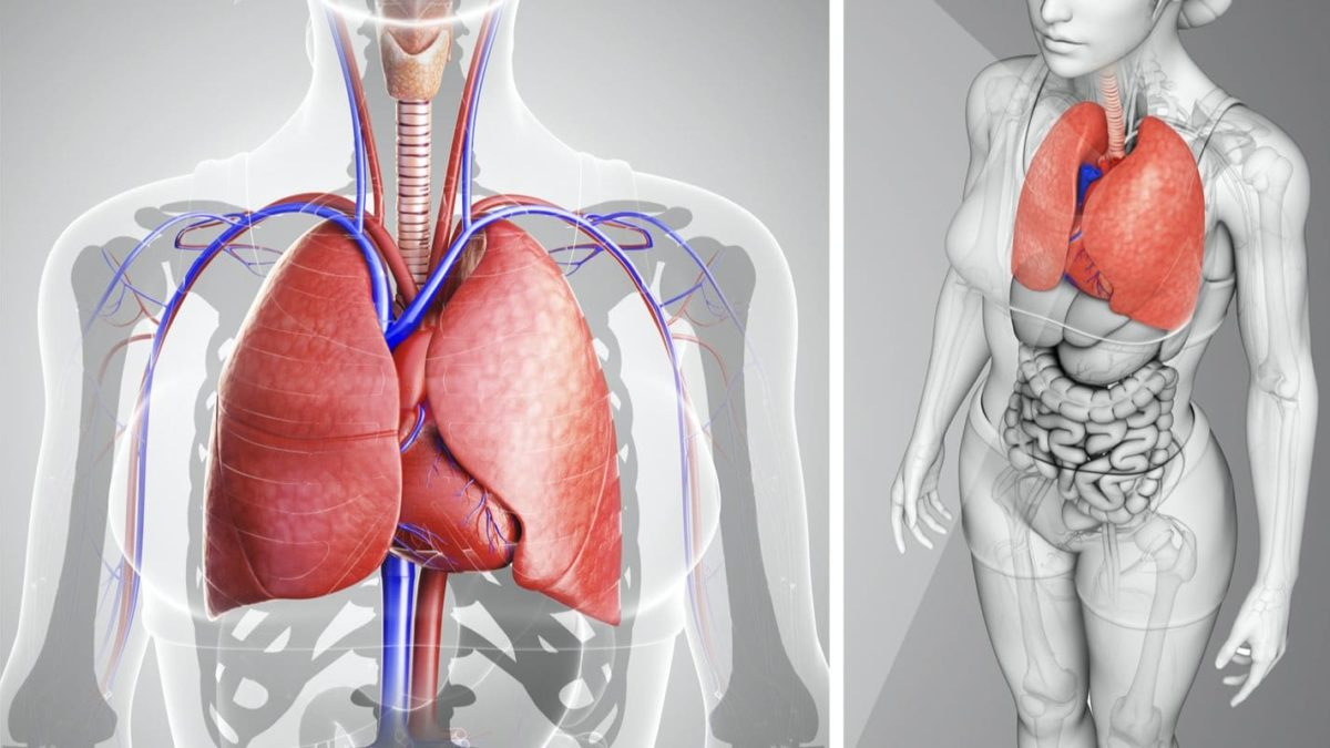 How To Cleanse Your Lungs Easily