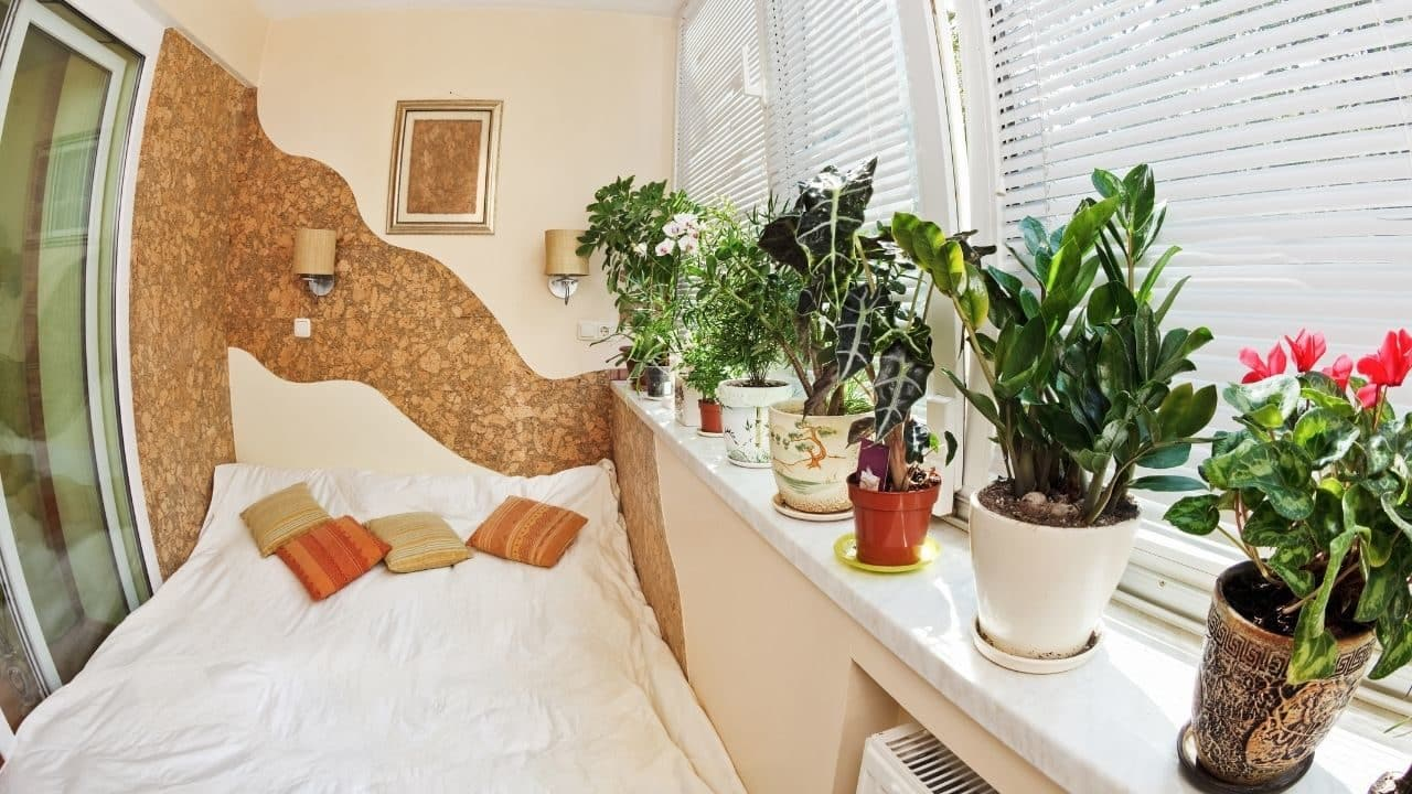 5 Bedroom Plants to Improve Your Overall Health