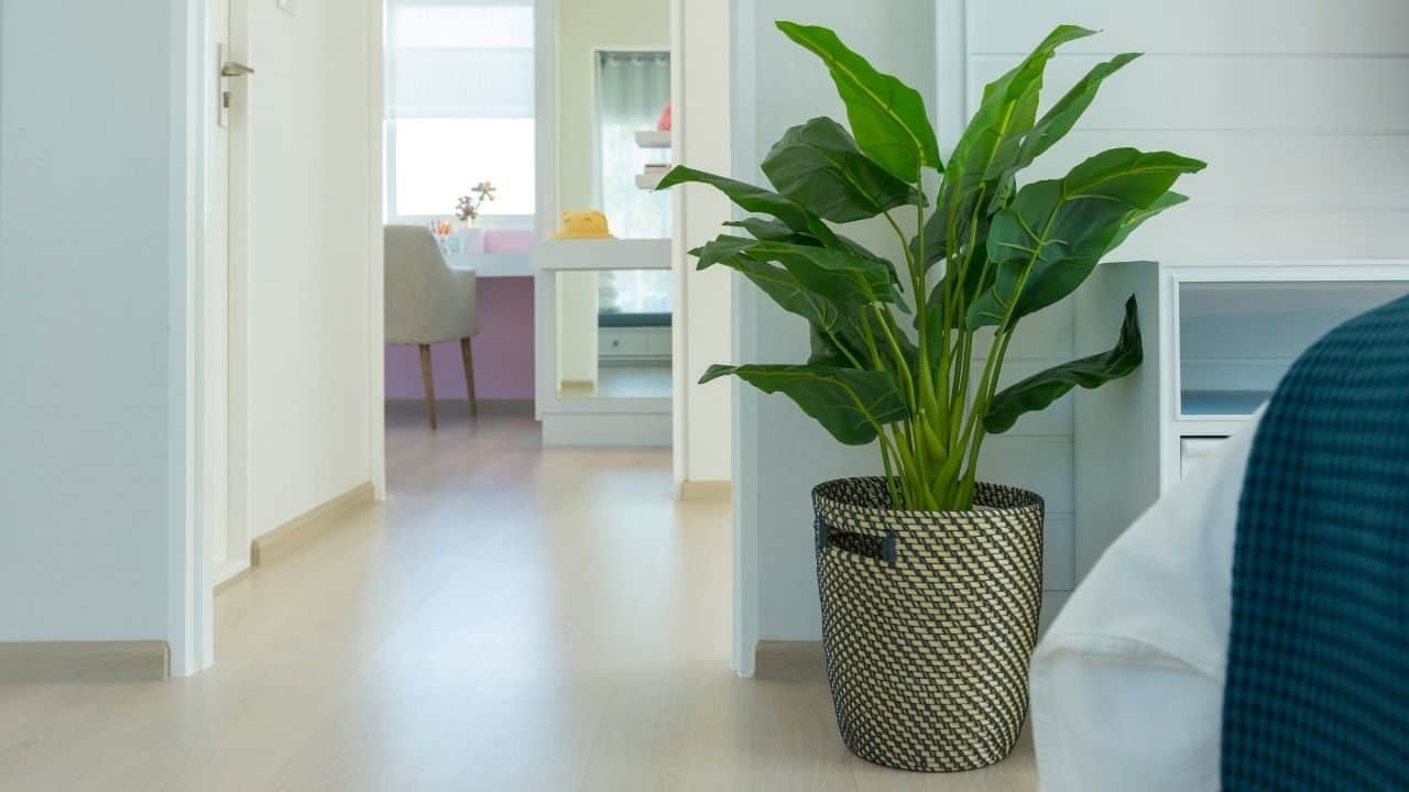 5 Plants You Need In Your Bedroom For Better Health