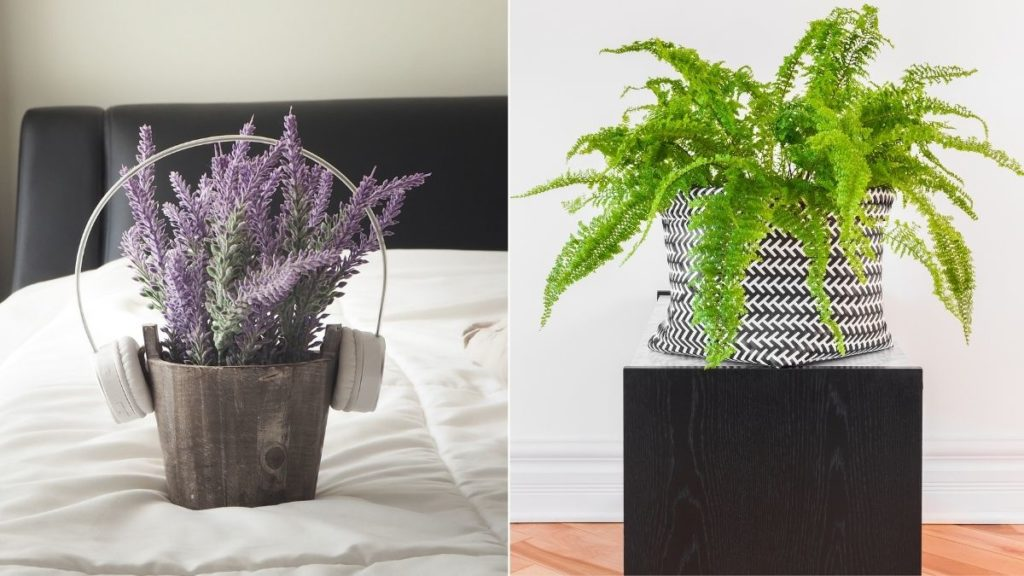 5 Plants you should keep in your bedroom