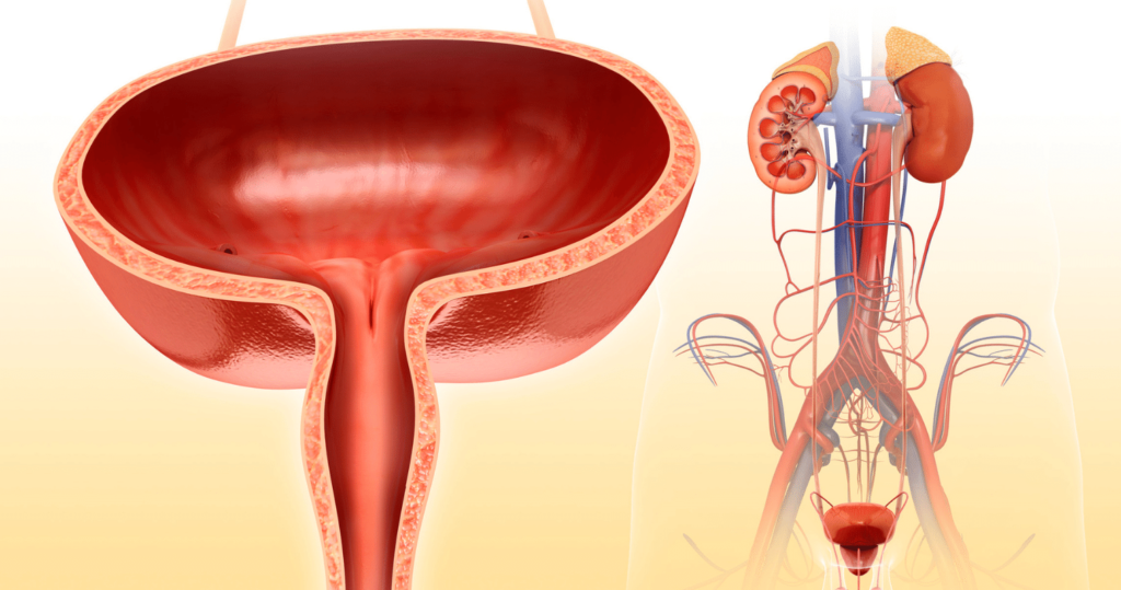 Benign prostatic hyperplasia (What You Need to Know)