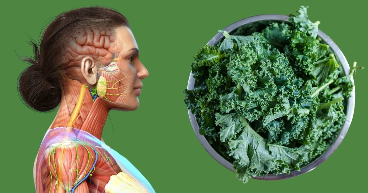 11 Reasons To Start Adding Kale To Your Diet