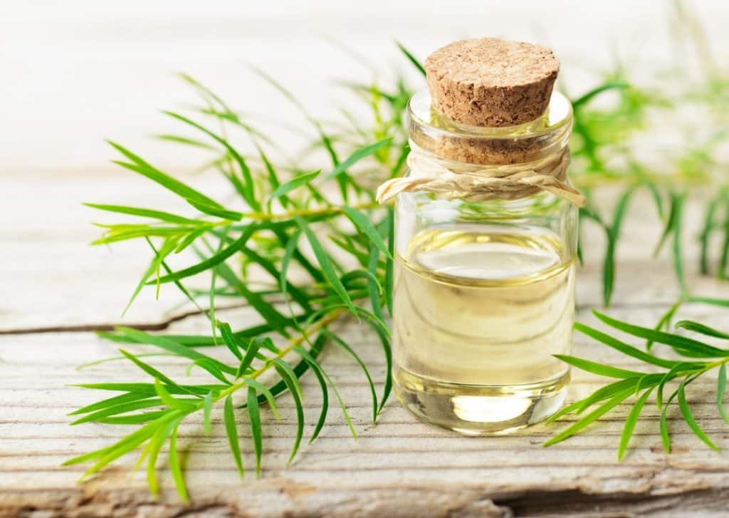 Tea Tree Oil For Fungal Scalp Infection