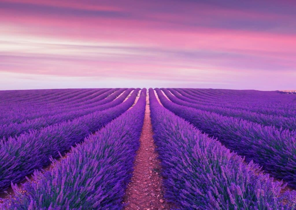 What Is Lavender?